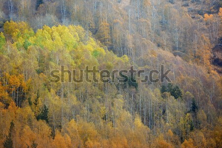 Autumn forest in mountains Stock photo © Novic