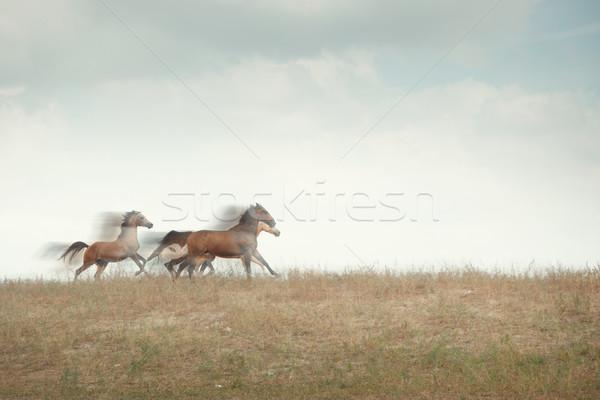 Speed Stock photo © Novic