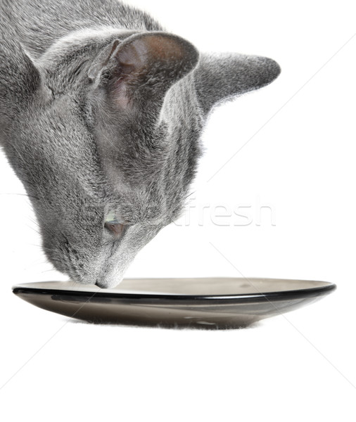 Cat Stock photo © Novic