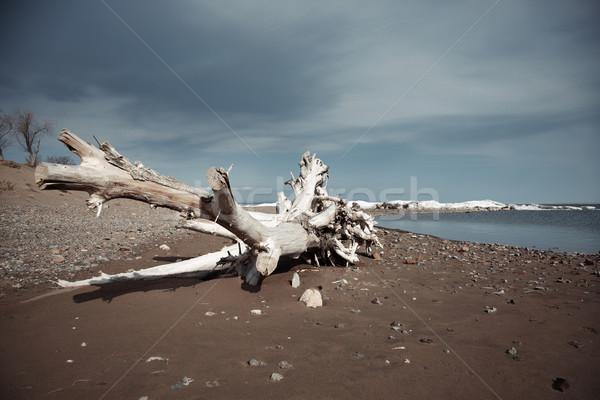 枯れ木 海 風景 休暇 沈黙 自然 ストックフォト © Novic