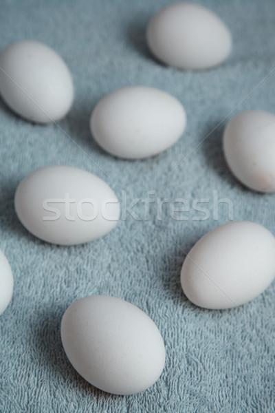 Pollo huevos fibra azul primavera huevo Foto stock © Novic