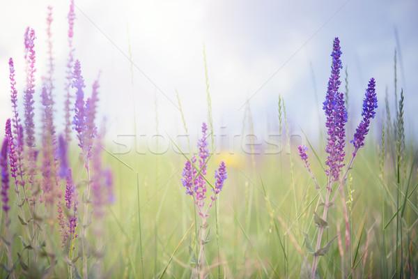 Spring Stock photo © Novic