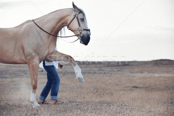 Stock photo: Horse training