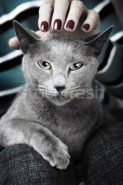 Wild cat Stock photo © Novic