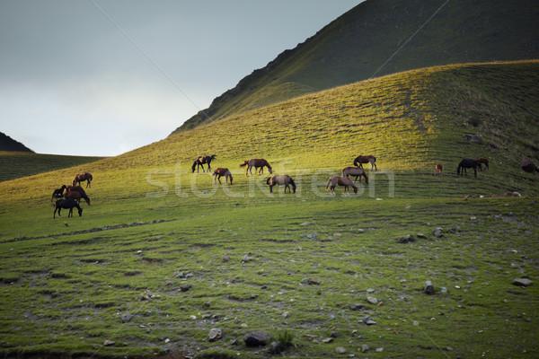 Troupeau chevaux montagne lieu vert animaux Photo stock © Novic