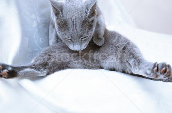 синий кошки гигиенический действий домой Сток-фото © Novic