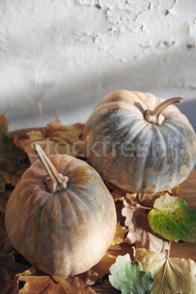 Autumn Stock photo © Novic