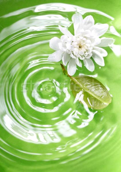 Natura fiore foglia verde liquido Foto d'archivio © Novic