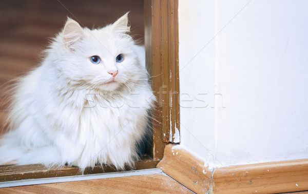 Fluffy white cat sitting on a floor Stock photo © Novic