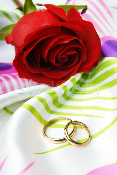 Red rose and golden rings Stock photo © Novic