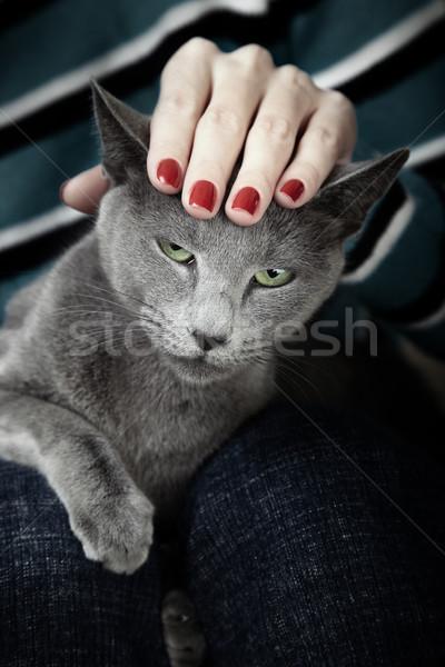 Angry cat Stock photo © Novic