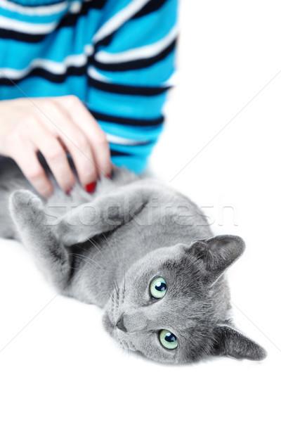 Macska emberi kéz fektet fehér szeretet boldog Stock fotó © Novic
