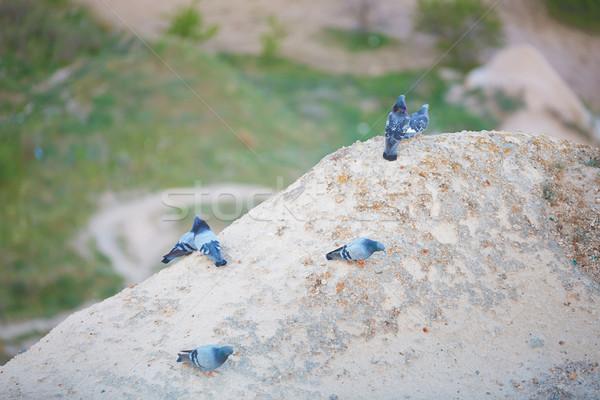 рок Top мнение природы птица каменные Сток-фото © Novic