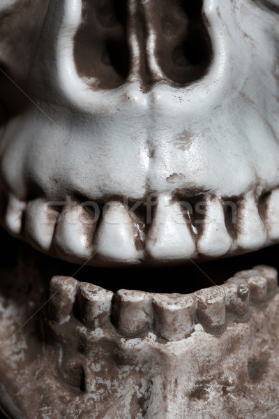 Close-up photo of the human skull Stock photo © Novic