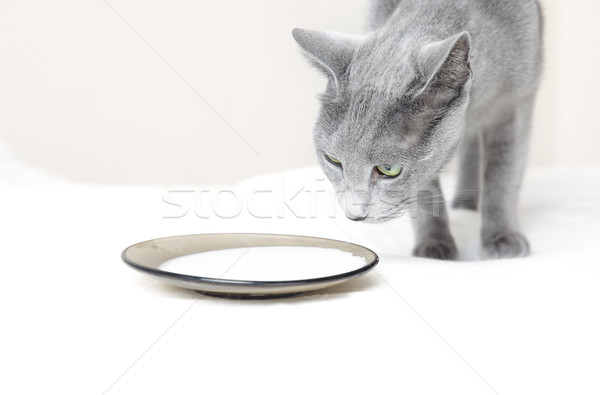 кошки молоко киска пластина комнату Сток-фото © Novic