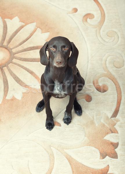 Kort vergadering binnenshuis hond gezicht grappig Stockfoto © Novic