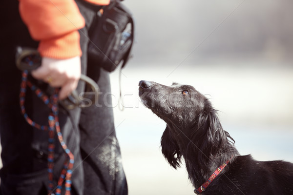 Hund Ausbilder Windhund Freien Farben Stock foto © Novic