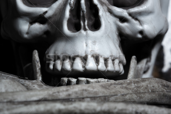 Close-up view of the human skull Stock photo © Novic