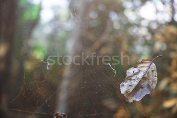 öreg pókháló közelkép kilátás dzsungel India Stock fotó © Novic