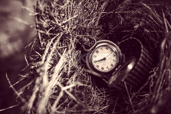 Pocket watch in red box on bird nest. Stock photo © nuiiko