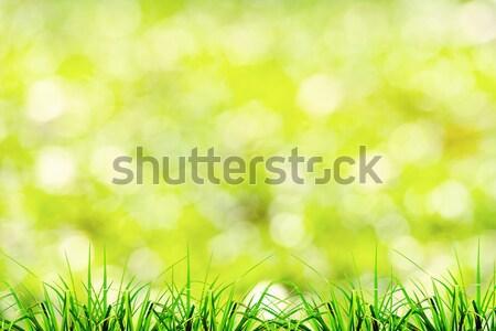 緑の草 自然 選択フォーカス 春 抽象的な 自然 ストックフォト © nuiiko