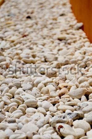 Yellow white brown stone show texture background Stock photo © nuiiko
