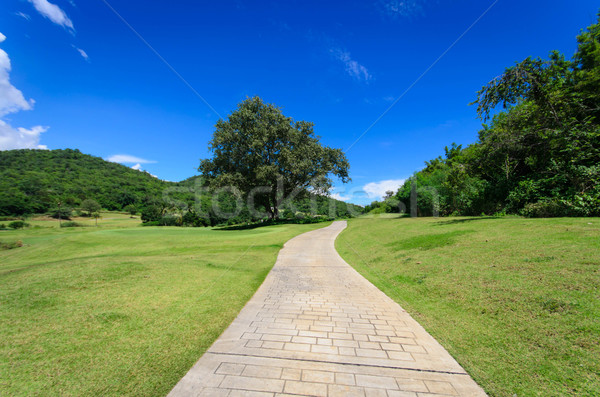 landscpe with pathway and blue sky Stock photo © nuiiko
