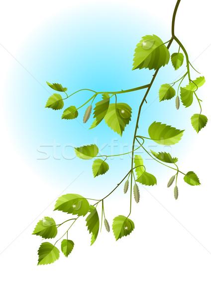 Valósághű ág nyírfa izolált fa tavasz Stock fotó © nurrka