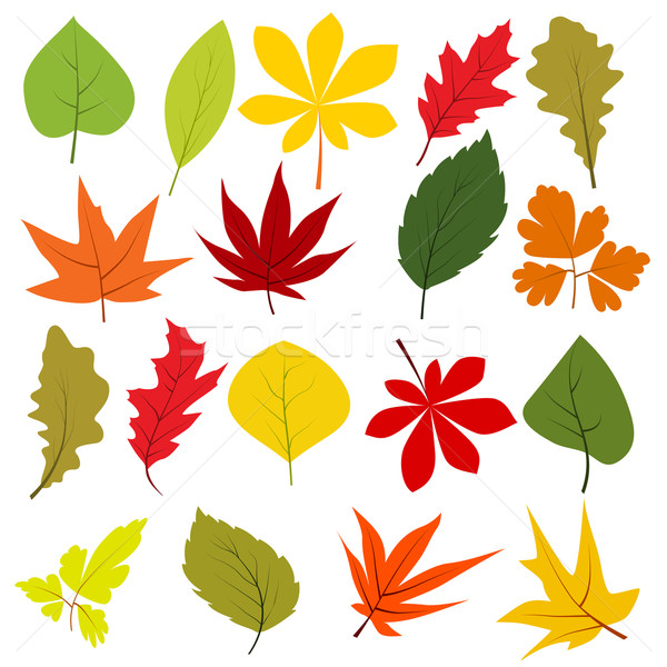 Collection of different autumn leaves Stock photo © nurrka