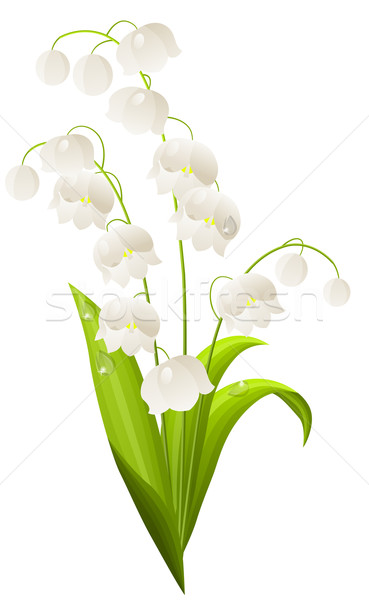 Lily of the valley isolated Stock photo © nurrka