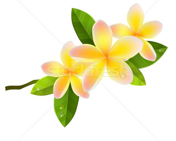 花 ピンク 孤立した 白 葉 美 ストックフォト © nurrka