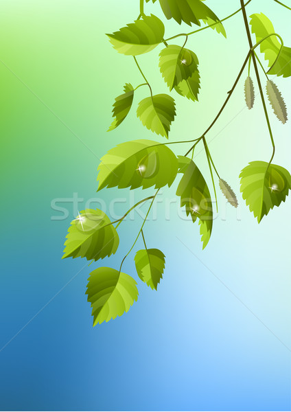 Realistic branch of birch Stock photo © nurrka