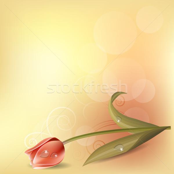 Stockfoto: Pastel · tulp · licht · roze · Pasen · voorjaar
