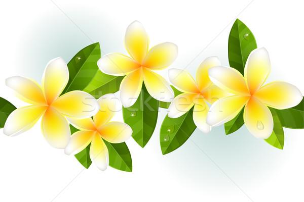 Végtelenített keret levelek harmat virág tavasz Stock fotó © nurrka
