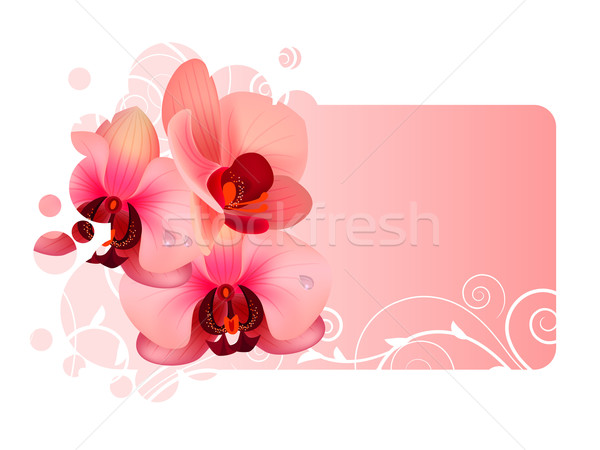 Orchid flower Stock photo © nurrka
