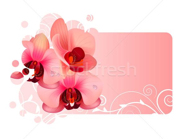 Orchidea virág díszes keret rózsaszín virágok Stock fotó © nurrka