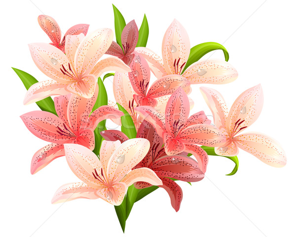 Bunch of pink lilies Stock photo © nurrka