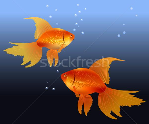 Dois ouro realista água peixe Foto stock © nurrka