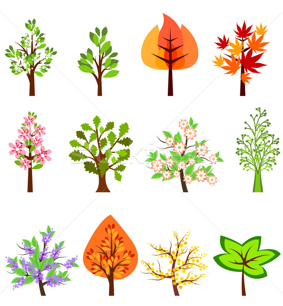 Set of different beautiful trees Stock photo © nurrka