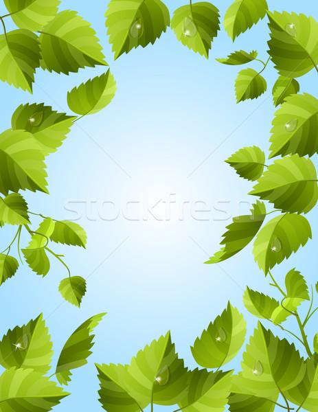 Marco hojas verdes frescos rocío primavera naturaleza Foto stock © nurrka