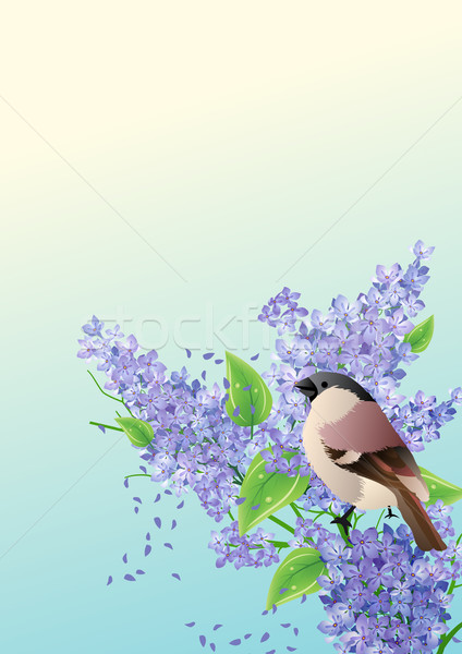 Background with sparrow Stock photo © nurrka
