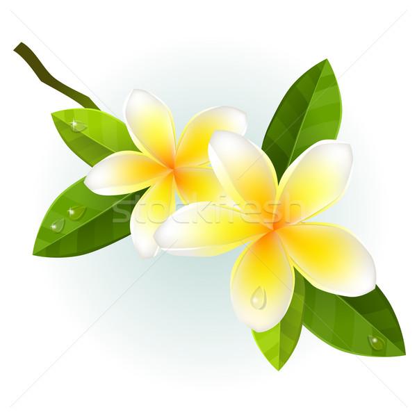 Fleurs isolé blanche fleur feuille beauté Photo stock © nurrka