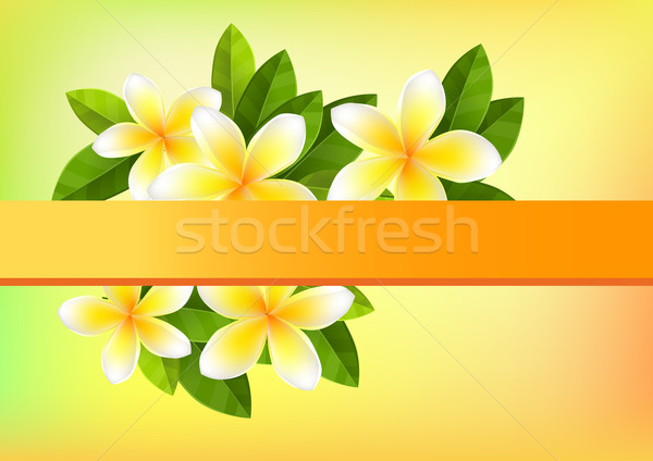 Frangipani background Stock photo © nurrka