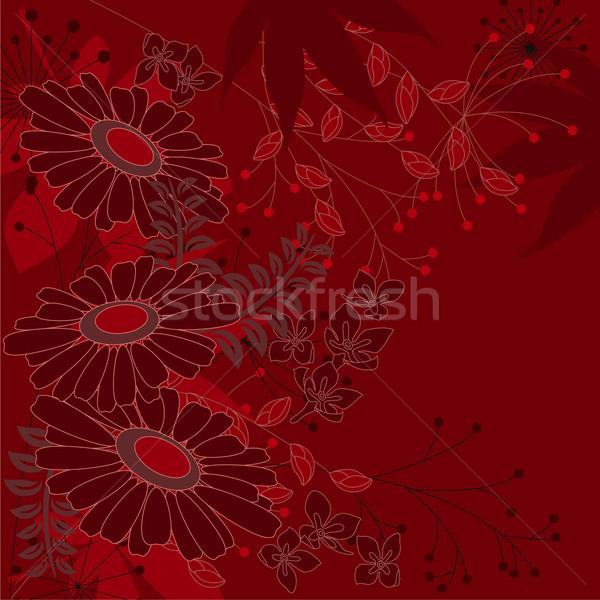 цветочный Ромашки розовый цветы растений Сток-фото © nurrka