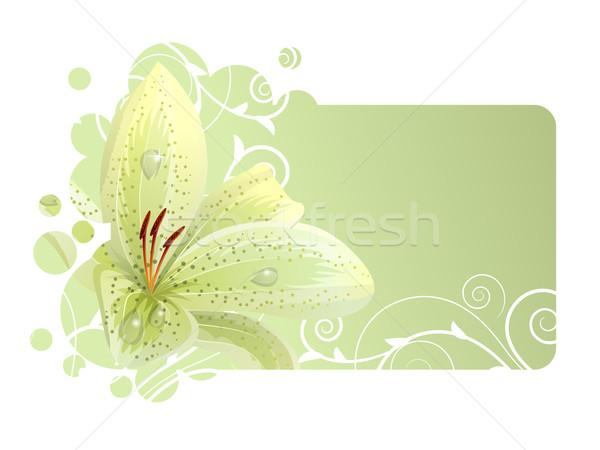 Stok fotoğraf: Güzel · çerçeve · beyaz · zambak · ışık · yaprak