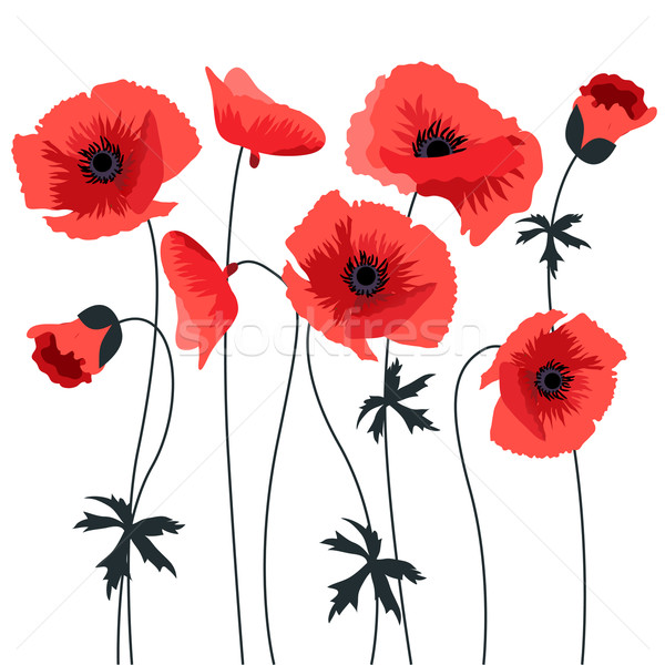 Red poppy Stock photo © nurrka