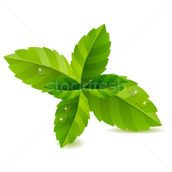 Fraîches vert menthe laisse isolé blanche Photo stock © nurrka