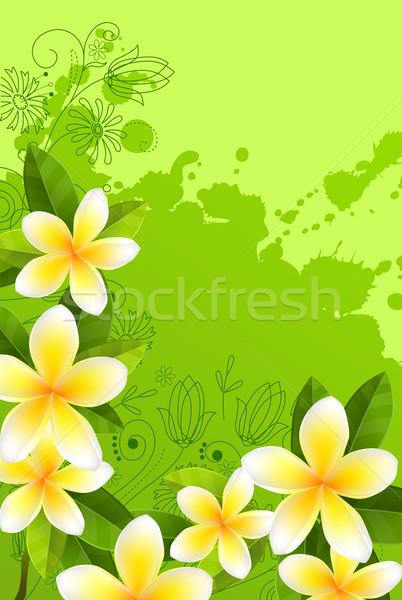 Quadro folhas verdes fresco flores brancas céu primavera Foto stock © nurrka