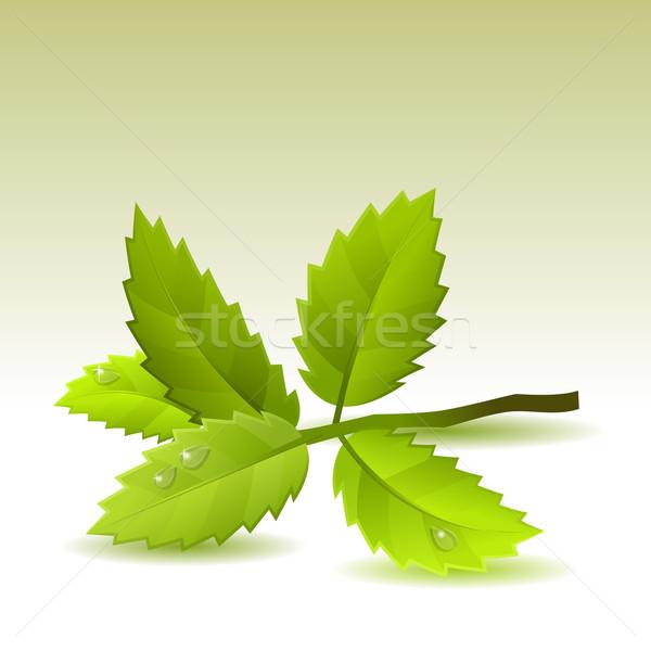 Feuilles vertes lumière faible branche arbre printemps Photo stock © nurrka