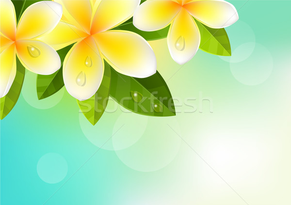 Tropic background with frangipani Stock photo © nurrka